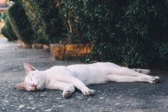 Άσπρη γάτα οδών που στηρίζεται στο πάτωμα κοντά στα δέντρα στοκ φωτογραφία