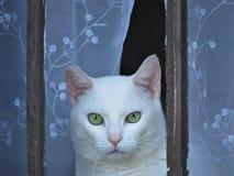 Άσπρη γάτα σε ένα αγροτικό παράθυρο Στοκ Εικόνες