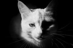 Άσπρη γάτα σε ένα σκοτεινό υπόβαθρο, μυστικό φως Στοκ φωτογραφίες με δικαίωμα ελεύθερης χρήσης