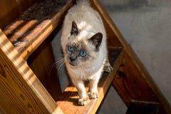 Άσπρη γάτα στα καφετιά σκαλοπάτια στοκ εικόνα