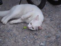 Άσπρη γάτα στα πράσινα μάτια όπως το νεφρίτη Στοκ φωτογραφία με δικαίωμα ελεύθερης χρήσης
