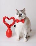 Άσπρη γάτα στον κόκκινο δεσμό τόξων με την καρδιά βαλεντίνων Στοκ Εικόνες