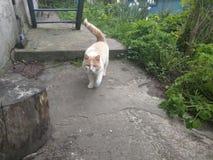 Άσπρη γάτα! Στοκ Φωτογραφία