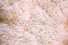 Άσπρη γούνα ως αφηρημένο υπόβαθρο Στοκ Εικόνα