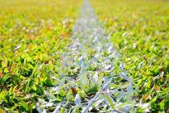 Άσπρη γραμμή λωρίδων στον πράσινο τομέα χλόης Στοκ φωτογραφία με δικαίωμα ελεύθερης χρήσης