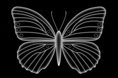 Άσπρη διαφανής πεταλούδα Στοκ εικόνα με δικαίωμα ελεύθερης χρήσης