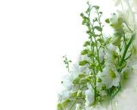 Άσπρη ευχετήρια κάρτα delphinium Στοκ Εικόνα