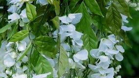 Άσπρη διακόσμηση λουλουδιών για το γάμο απόθεμα βίντεο