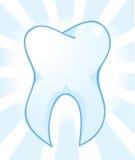 Άσπρη διανυσματική απεικόνιση δοντιών Στοκ Εικόνες