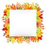 Άσπρη κάρτα με τα ζωηρόχρωμα φύλλα φθινοπώρου Διάνυσμα eps-10 Στοκ Φωτογραφία