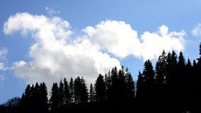 Άσπρη κίνηση σύννεφων σωρειτών στο μπλε ουρανό επάνω από τις σκιαγραφίες δέντρων έλατου απόθεμα βίντεο