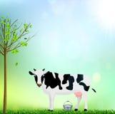 Άσπρη και μαύρη επισημασμένη αγελάδα με μια απεικόνιση γάλακτος κάδων στοκ εικόνες