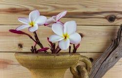 Άσπρη και ρόδινη δέσμη plumeria λουλουδιών στο μεγάλο παλαιό ψημένο τρύγος CL Στοκ Φωτογραφίες