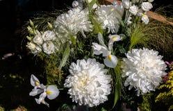Άσπρη κατάταξη λουλουδιών Στοκ Εικόνες