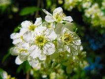 Άσπρη κινηματογράφηση σε πρώτο πλάνο λουλουδιών Στοκ Φωτογραφίες
