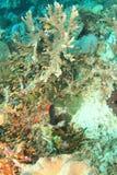Άσπρη κοραλλιογενής ύφαλος Στοκ Εικόνες