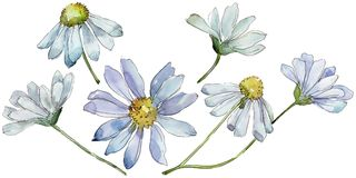 Άσπρη μαργαρίτα Floral βοτανικό λουλούδι Άγριο φύλλο άνοιξη wildflower που απομονώνεται διανυσματική απεικόνιση
