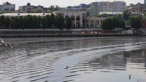 Άσπρη μύγα γλάρων πέρα από το νερό του ποταμού κοντά στην αποβάθρα στη θερινή ημέρα φιλμ μικρού μήκους