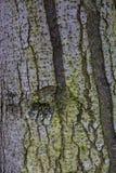 Άσπρη δομή δέντρων στοκ εικόνες