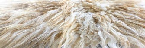 Άσπρη οργανική σύσταση δεράτων Παλαιό παλτό Άσπρο υπόβαθρο ταπήτων Στοκ Φωτογραφία