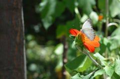 Άσπρη πεταλούδα στα ξύλα Στοκ Εικόνες