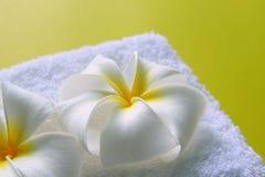 Άσπρη πετσέτα με τα λουλούδια του plumeria στο κίτρινο υπόβαθρο Στοκ Φωτογραφία