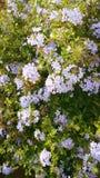 Άσπρη πράσινη σκηνή λουλουδιών Στοκ Εικόνα
