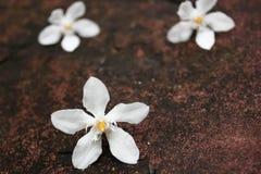 Άσπρη πτώση λουλουδιών στην πέτρα, Στοκ εικόνες με δικαίωμα ελεύθερης χρήσης