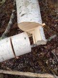 Άσπρη σημύδα περικοπών Στοκ φωτογραφία με δικαίωμα ελεύθερης χρήσης