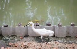 Άσπρη στάση πουλιών Στοκ φωτογραφίες με δικαίωμα ελεύθερης χρήσης
