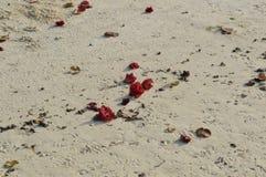 Άσπρη στρωμένη με άμμο παραλία με τα λουλούδια Στοκ φωτογραφίες με δικαίωμα ελεύθερης χρήσης