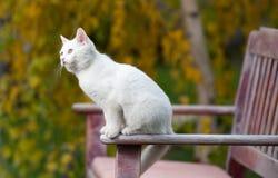 Άσπρη συνεδρίαση γατών στον πάγκο στο πάρκο Στοκ Φωτογραφίες