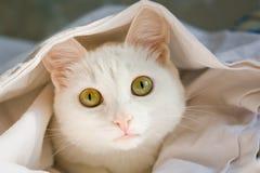 Άσπρη συνεδρίαση γατών στο πλαίσιο του φύλλου, μεγάλα φωτεινά μάτια Στοκ Εικόνες
