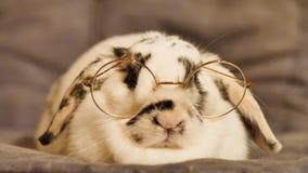 Άσπρη συνεδρίαση κουνελιών απόθεμα βίντεο