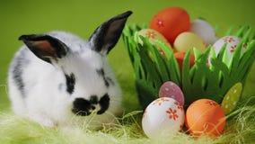 Άσπρη συνεδρίαση λαγουδάκι Πάσχας κοντά στο διακοσμητικό καλάθι χλόης με τα αυγά φιλμ μικρού μήκους
