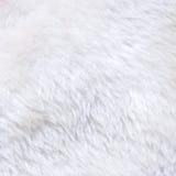 Άσπρη σύσταση γουνών Στοκ Εικόνες