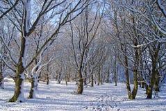 άσπρη χειμερινή χώρα των θα&upsilo Στοκ Φωτογραφίες