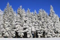 άσπρη χειμερινή χώρα των θα&upsilo Στοκ Εικόνες