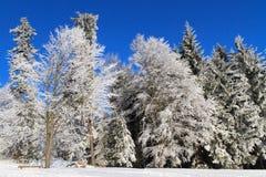 άσπρη χειμερινή χώρα των θα&upsilo Στοκ φωτογραφία με δικαίωμα ελεύθερης χρήσης