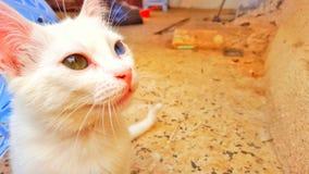Άσπρη όμορφη γάτα Στοκ Φωτογραφία