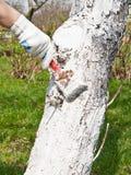 άσπρισμα δέντρων Στοκ εικόνα με δικαίωμα ελεύθερης χρήσης
