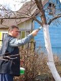 άσπρισμα δέντρων Στοκ εικόνες με δικαίωμα ελεύθερης χρήσης