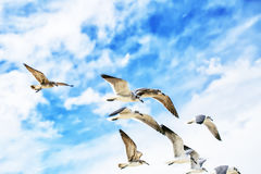 Άσπροι γλάροι που πετούν στον μπλε ηλιόλουστο ουρανό Στοκ φωτογραφία με δικαίωμα ελεύθερης χρήσης