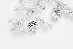 Άσπροι δέντρο και κώνος Χριστουγέννων προτύπων Επίπεδος βάλτε σε ένα άσπρο ξύλινο υπόβαθρο, με τη θέση για το κείμενό σας Τοπ όψη στοκ εικόνα με δικαίωμα ελεύθερης χρήσης
