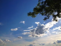 Άσπροι σύννεφα, ουρανός και δέντρο Στοκ εικόνες με δικαίωμα ελεύθερης χρήσης