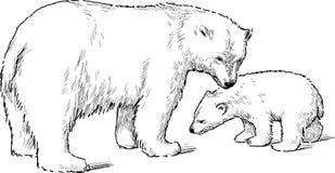 Άσπρος αντέξτε με cub Στοκ Εικόνα