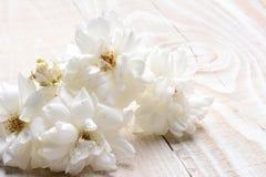 Άσπρος αυξήθηκε ακόμα ζωή στο λευκό Στοκ Εικόνα