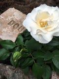 Άσπρος αυξήθηκε ανθίζοντας και αυξήθηκε οφθαλμός στον κήπο Στοκ φωτογραφία με δικαίωμα ελεύθερης χρήσης