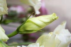 Άσπρος αυξήθηκε οφθαλμός λεπτομερές ανασκόπηση floral διάνυσμα σχεδίων διάστημα αντιγράφων Στοκ Εικόνες