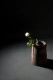 Άσπρος αυξήθηκε σε ένα ξύλινο βαρέλι αυξήθηκε λευκό Στοκ φωτογραφία με δικαίωμα ελεύθερης χρήσης